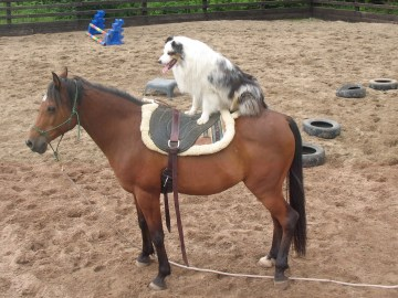 Nikaya riding Mashud profile picture 1