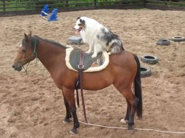 Nikaya riding Mashud profile picture 1